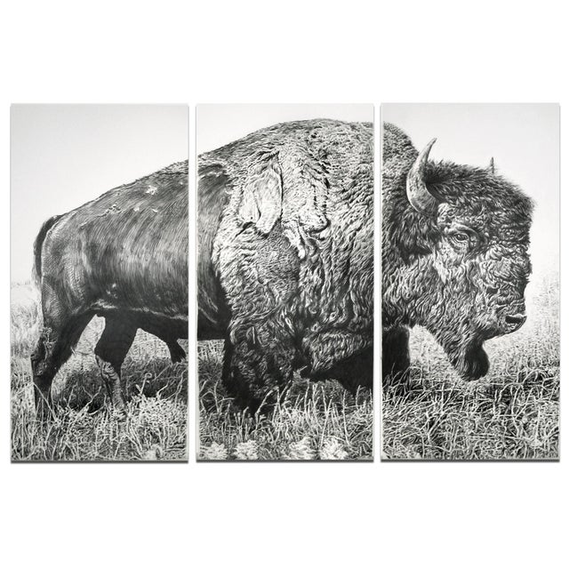 "Contemporary Contemporary ""Bison"" Rick Shaefer Charcoal Print For Sale - Image 3 of 3"