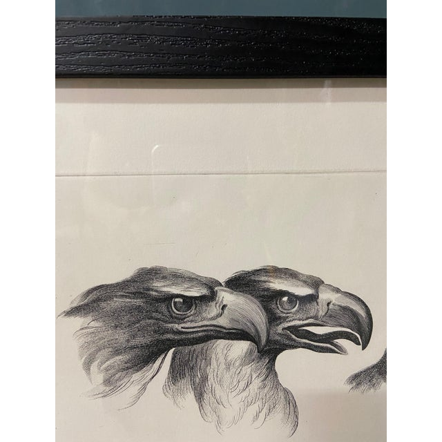 Figurative Man as Eagle - Physiognomic Heads Series Framed Illustration by Charles Le Brun For Sale - Image 3 of 12