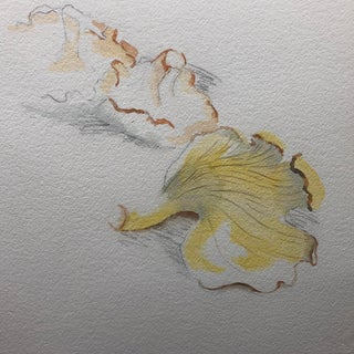 Still lIfe Watercolor of Mushrooms For Sale