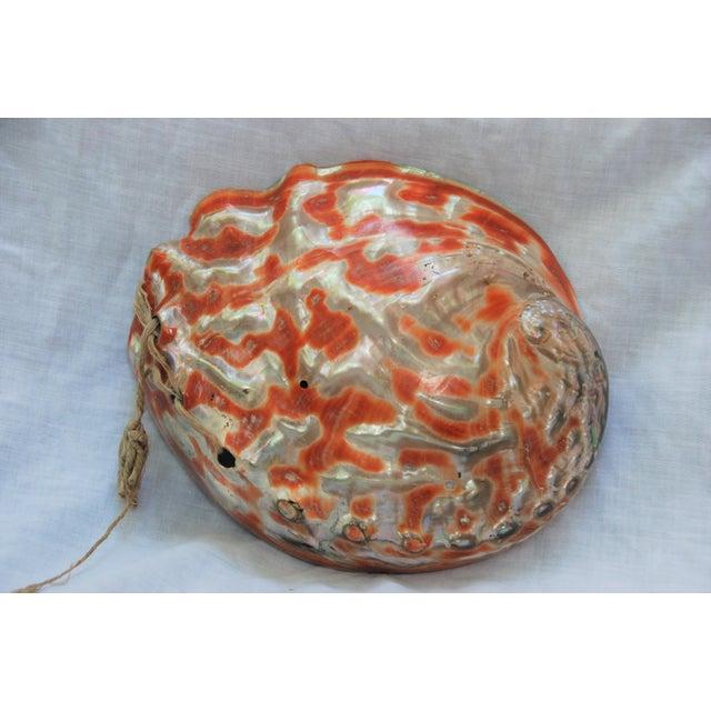 Vintage Large Abalone Shell - Image 7 of 8