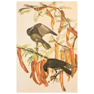 1960s Fish Crow Cottage Style Print by Audubon Preview