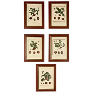 Set of 5 Hand-Colored Engravings by Duhamel De Monceau, 1768 For Sale