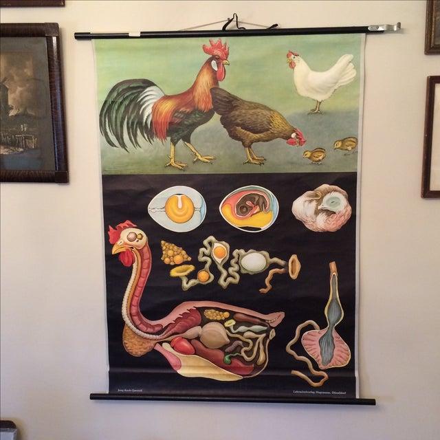 Jung-Koch-Quentell Chart Chicken - Image 2 of 11