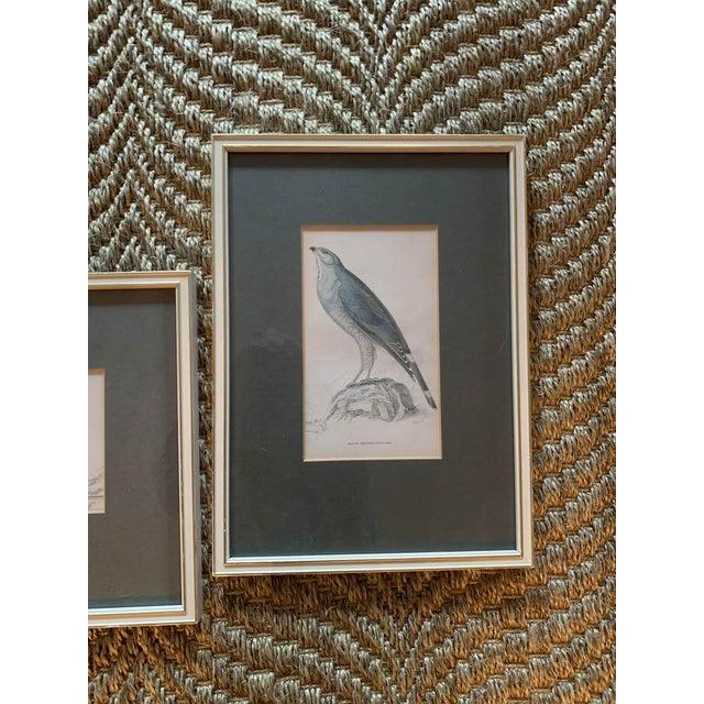 Set of 6 1840's Bird Engravings - Framed For Sale - Image 4 of 11