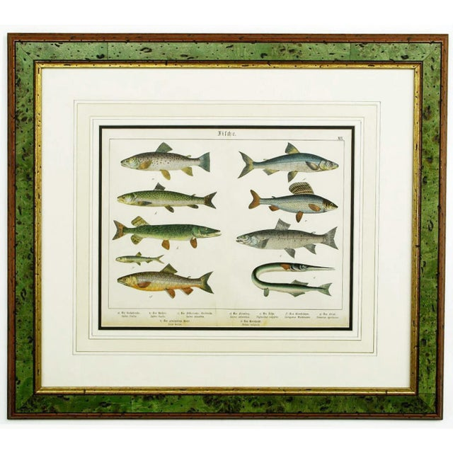 Stephen Schubert Colorful Trio 1880 Schubert German Lithographs of Aquatic Life For Sale - Image 4 of 10