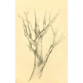 French Pencil Drawing of Tree For Sale