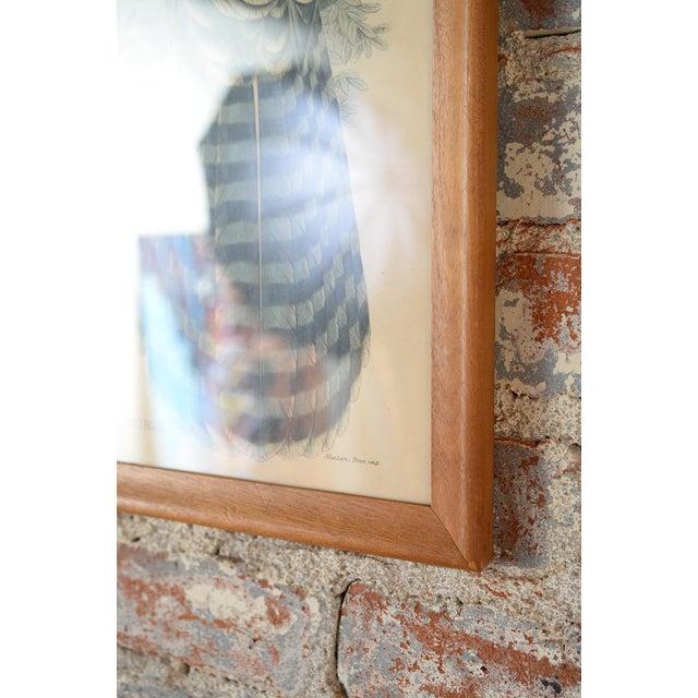 "John Gould ""Erythrotriorchis Dorlae"" Bird Lithograph - Image 7 of 7"