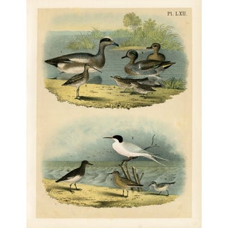 North American Shorebirds, 1878 Lithograph For Sale