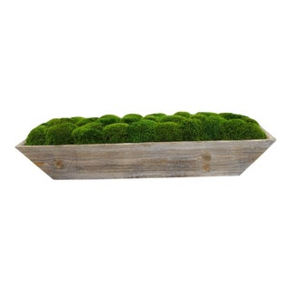 Distressed Gray Wooden Trough With Preserved Moss