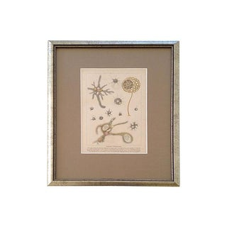 Antique Living Protoplasm Lithograph