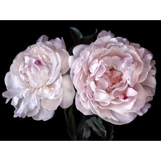 "Photographic Botanical Print, ""Peony Romance"" by Artist Debi Shapiro For Sale"