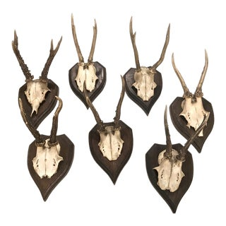 Set of 7 Black Forest Mounted Roebuck Horns, C. 1910