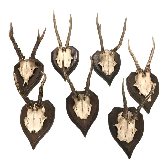 Set of 7 Black Forest Mounted Roebuck Horns, C. 1910 For Sale