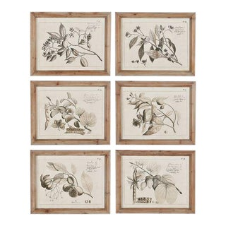 Kenneth Ludwig Chicago Fruit Bearing Branch Illustrations - Set of 6 For Sale