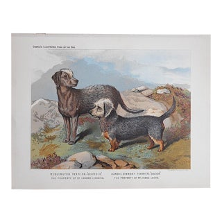 """Antique Dog Lithograph """"Terriers"""" For Sale"""