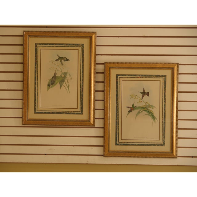 Original John Gould Matted & Gold Framed Colored Etchings - a Pair For Sale - Image 13 of 13