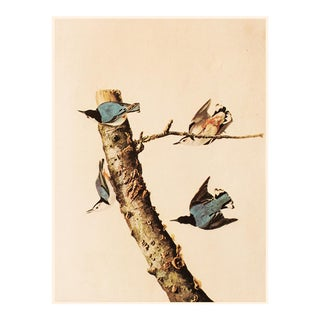 White-Breasted Nuthatch by Audubonintage Cottage Print For Sale