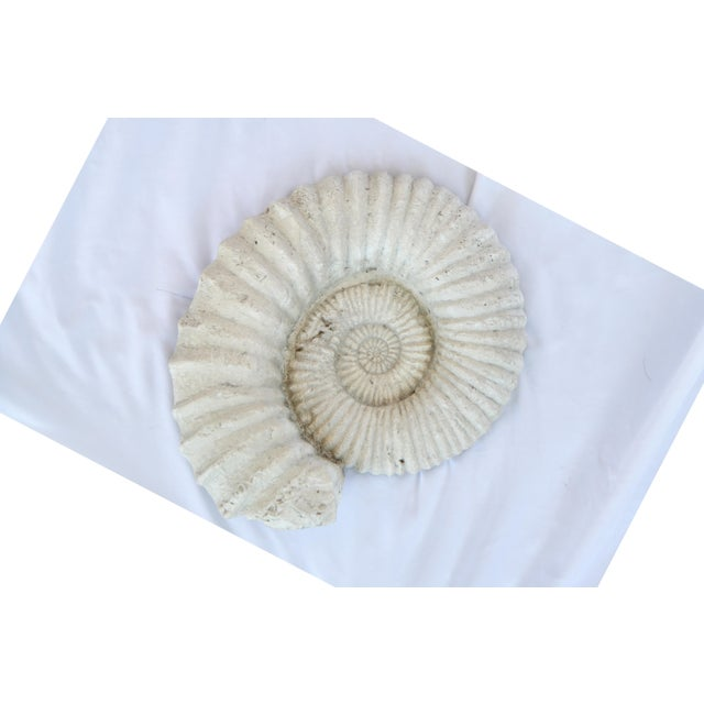 Vintage cast shell wall sculpture. Wired on back for hanging.