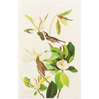 1966 Cottage Style Lithograph of a Warbling Vireo by Audubon For Sale