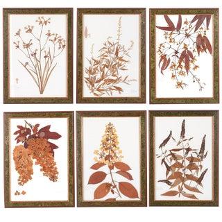 Ravello & Torino Italian Botanicals - Set of 6 For Sale