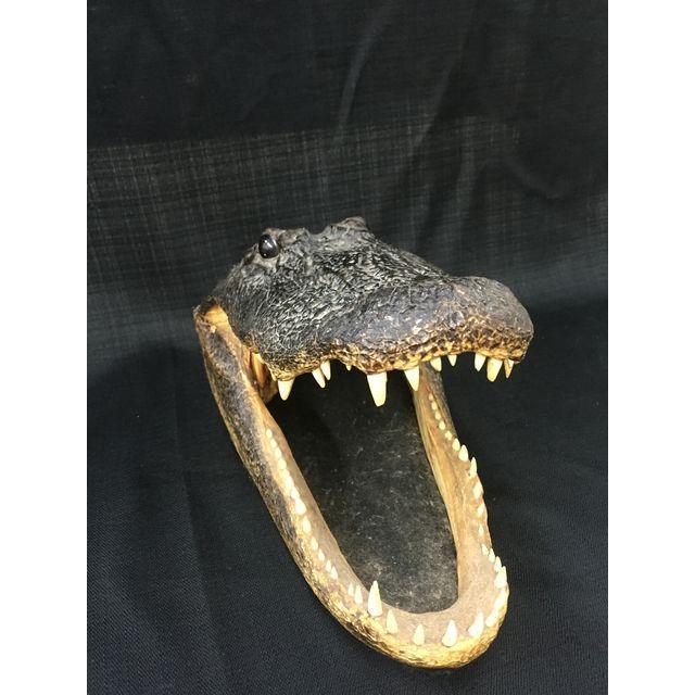 Vintage Taxidermy Alligator Head - Image 4 of 5