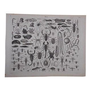 Antique Lithograph-Insects For Sale