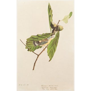 1966 Cottage Lithograph of Swainson's Warbler by John James Audubon For Sale