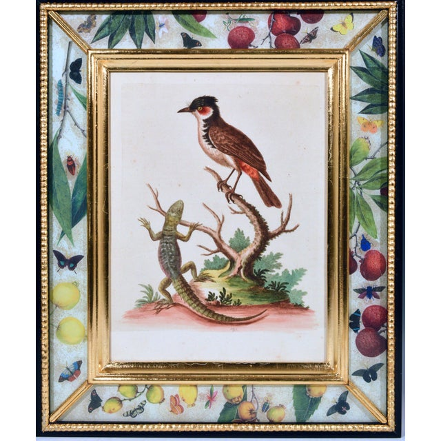 American C. 1740 George Edwards Engravings of Birds - Set of 12 For Sale - Image 3 of 12