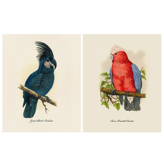 1884 Alexander Francis Lydon, Parrot Reproduction - Set of 12, N2 For Sale - Image 4 of 13