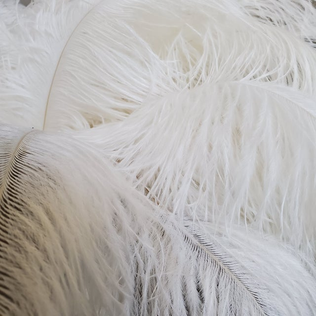 2020s Naturally Shed White Ostrich Feathers, 25 Piece For Sale - Image 5 of 7