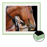 Image of Native 1 by Holly Roesch Contemporary Photograph in Light Green Acrylic Frame, Small For Sale