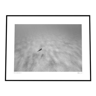 'Diving Free' Black & White Photograph on Rag Paper by Enric Gener Framed in Black For Sale
