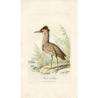 Antique 1821 Shorebird Bittern Print For Sale