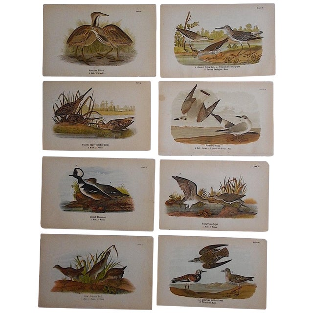 Antique American Bird Lithographs - Set of 8 For Sale