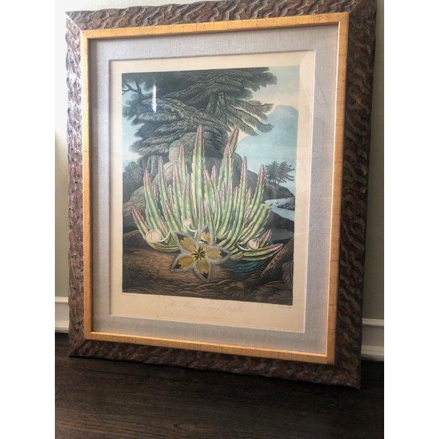 Green 19th Century Boho Chic Succulent Botanic Print For Sale - Image 8 of 12