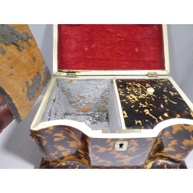 Early 19th Century 19th Century Tortoise Shell Tea Caddy For Sale - Image 5 of 13