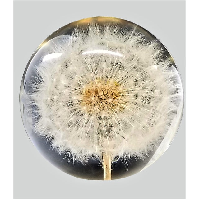 Vintage Lucite Sculpture Paperweight of a Dry Dandelion For Sale - Image 11 of 12