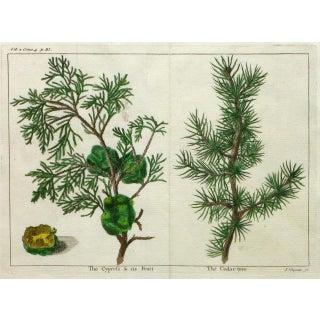 Antique Botanical Print Trees Engraving, C. 1780