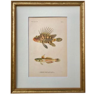 Antique Color Lithograph of Hawaiian Fish For Sale
