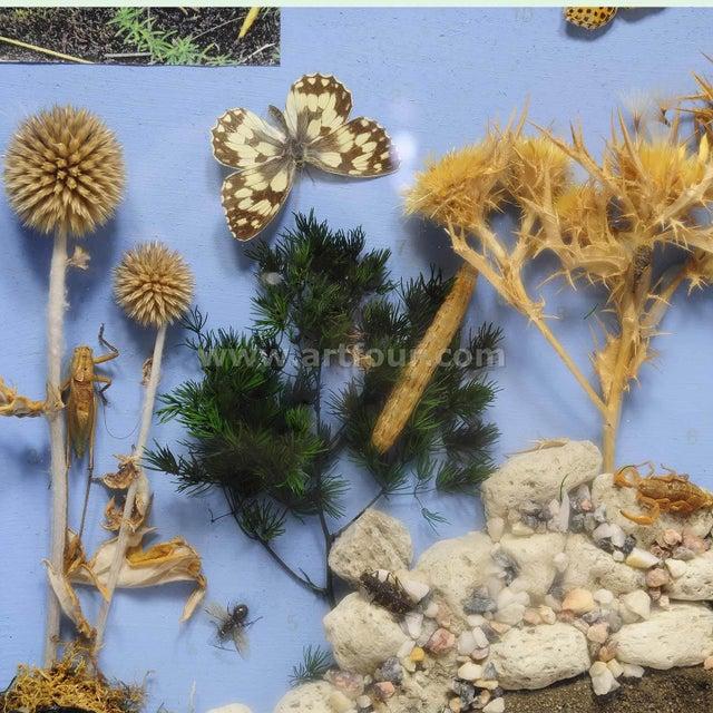 Illustration School Teaching Display Of Biosphere Of Poor Grassland For Sale - Image 3 of 7