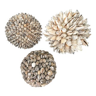 Natural Seashells Spheres, Set/3 For Sale