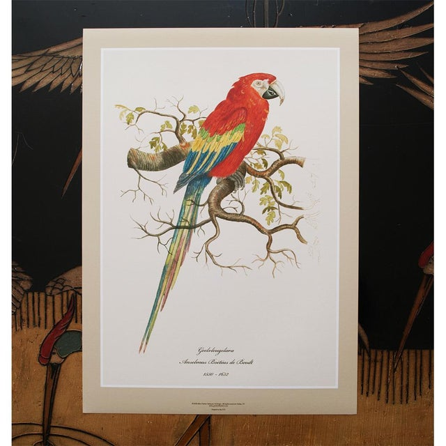 1590s Scarlet Macaw , XL Print by Anselmus De Boodt For Sale In Dallas - Image 6 of 8