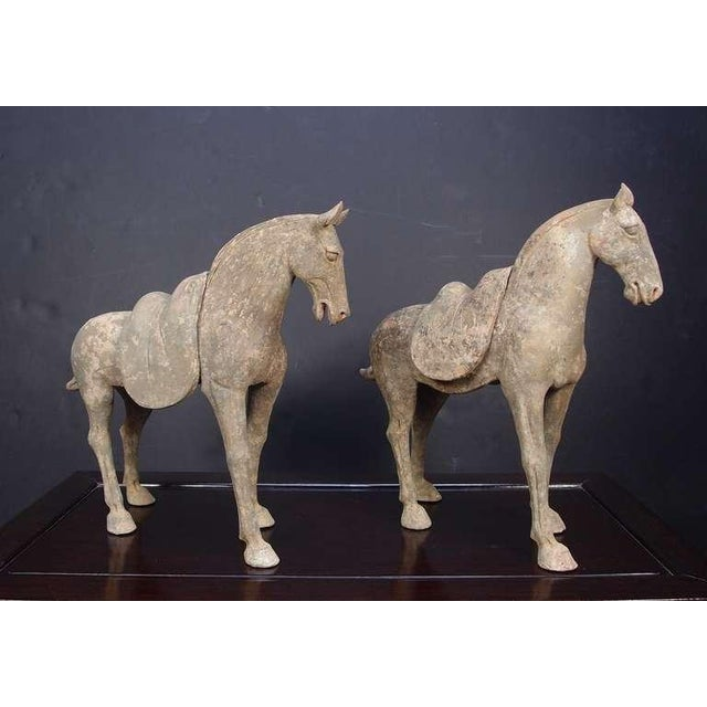 Pair Early Tang Dynasty Grey Pottery Striding Horses with Removable Saddles For Sale In Austin - Image 6 of 8