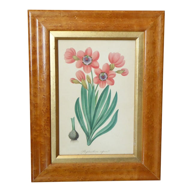 19th Century English Spring Flower Print in Maple Frame For Sale
