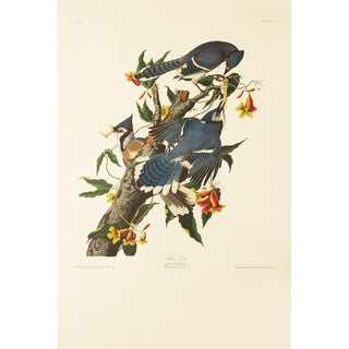 1990s Blue Jay by Audubon, Large American Classical Print For Sale