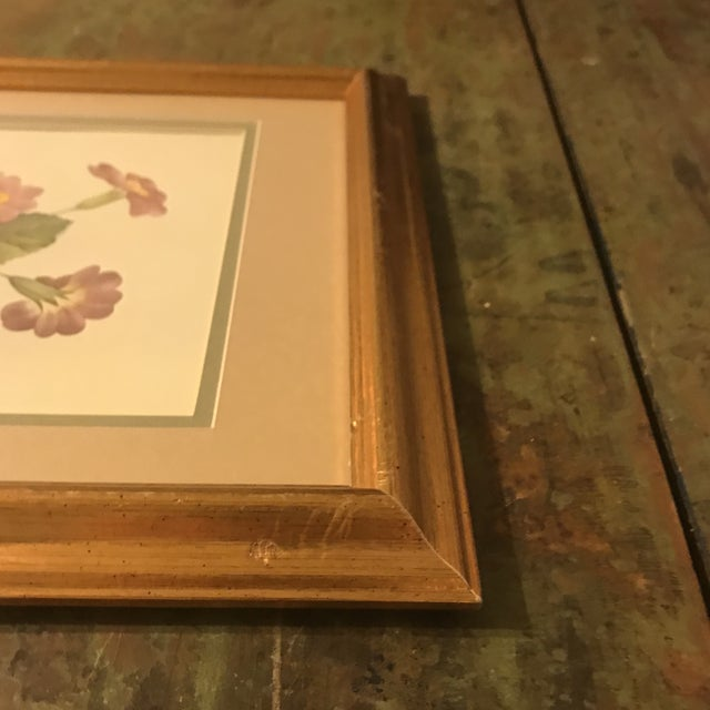 1960s Vintage PJ Redoute Botanical Framed Prints - A Pair For Sale - Image 5 of 13