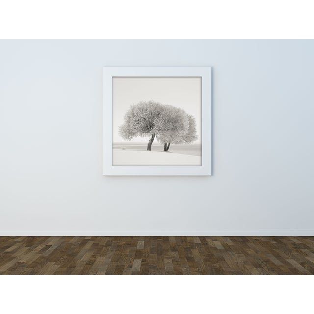 "Ari Salmela ""Different Season"" Framed Photo Print - Image 3 of 3"