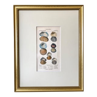 Antique French Colored Engravings of a Sea Shells by Turpin Paris 1816 For Sale