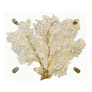 Gold Resin Sea Fan In Acrylic Lucite Floating Frame For Sale