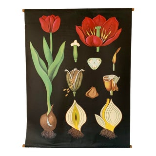 Jung-Koch-Quentell Tulip Botanical Poster For Sale